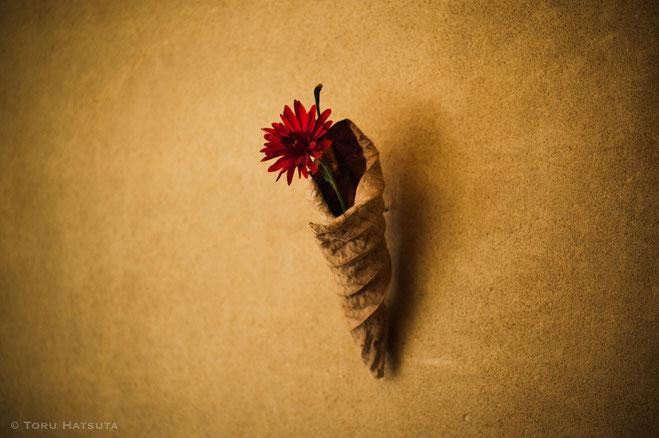 冬の落ち葉に花を入れる