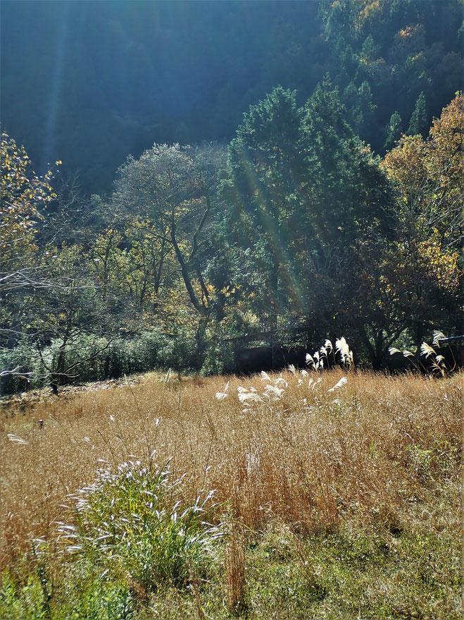 里山体験 神奈川 自然栽培 固定種 農業体験首都圏 体験農場首都圏 野菜作り教室首都圏  さとやま農学校 無農薬栽培