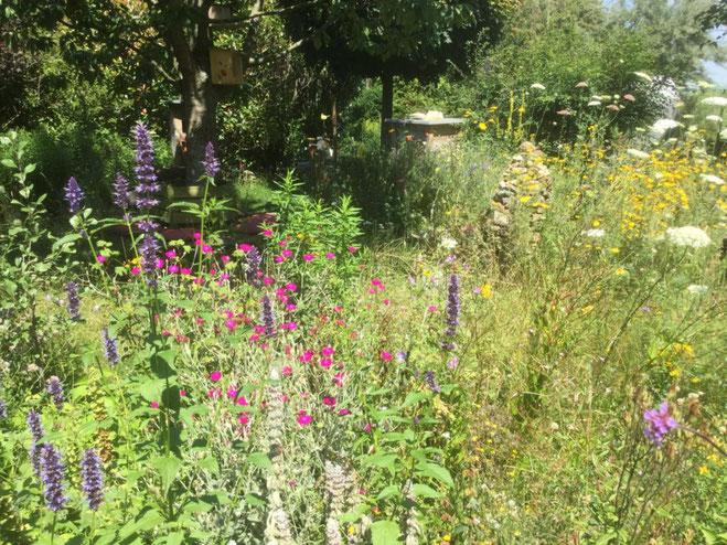 Pflanzwettbewerb Wir tun was für Bienen