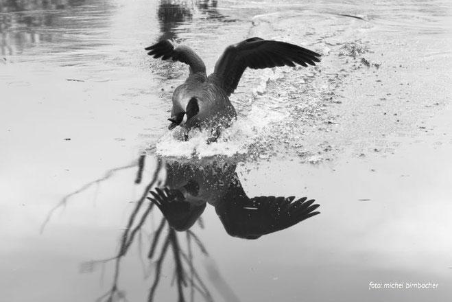 Leica M Monochrom + Voigtländer Ultron 1,7/35mm