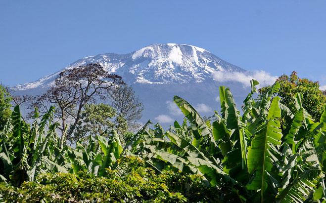 Blick von der Kaliwa Lodge: Schnee auf dem Kilimandscharo                                                         © Thomas Becker