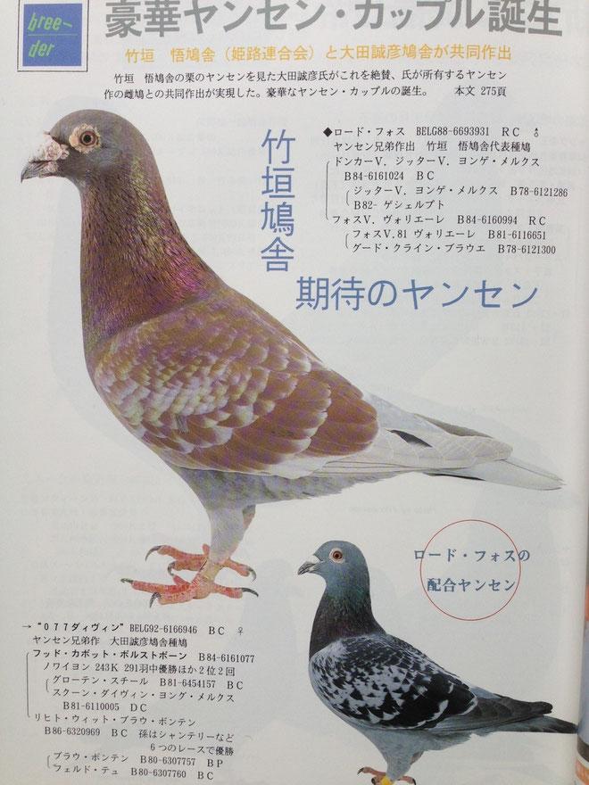 ヤンセン兄弟鳩舎作出鳩の中では竹垣悟鳩舎の代表鳩の一羽・ロード・フォスである。