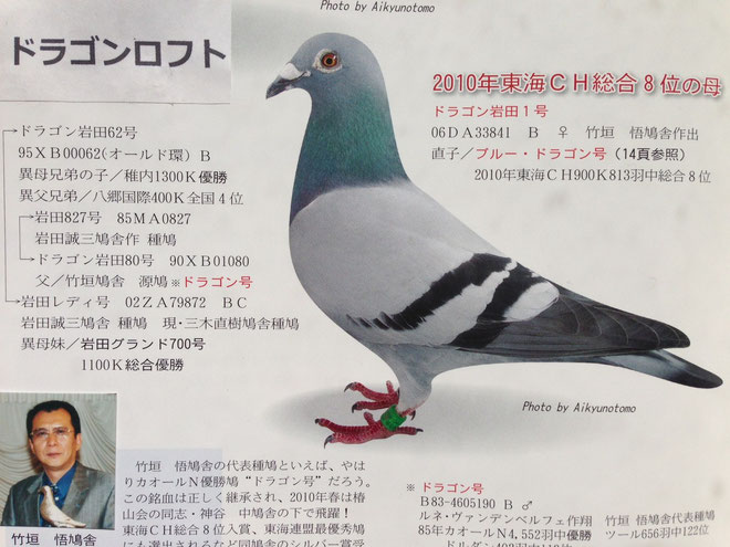 銘鳩ドラゴン号の直系で現在の私の代表鳩「ブルードラゴン号」の両親である
