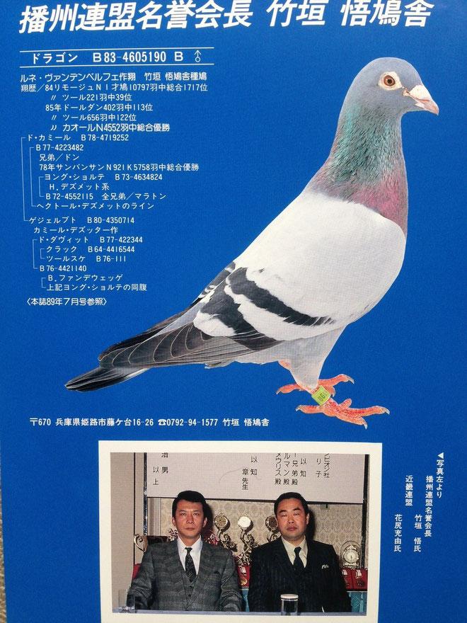 私の憧れの人であり、私が鳩飼いとして目標とした師匠のひとりである。花尻充由モスキート系宗家との満願の一葉