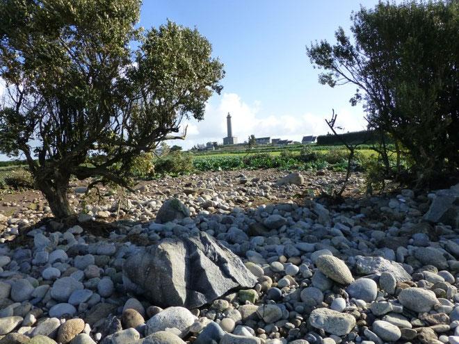 C'était un champ de choux fleur abrité par une haie, les galets et les arbustes de la haie on été arrachés et projetés par la mer sur une cinquantaine de mètres