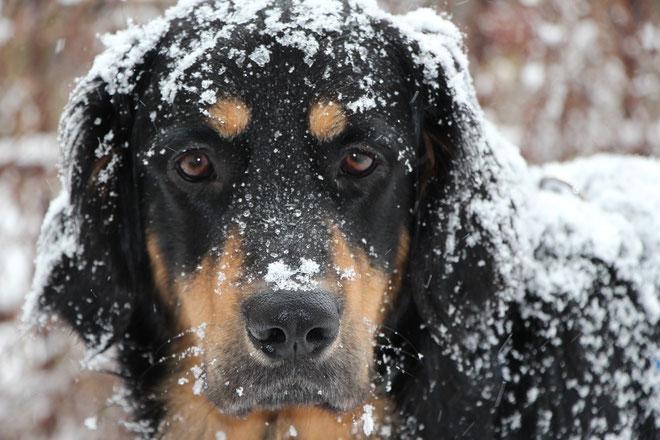 """Nein, auch in Zühlsdorf hat's nicht geschneit: Das ist """"Schnee von gestern""""!"""
