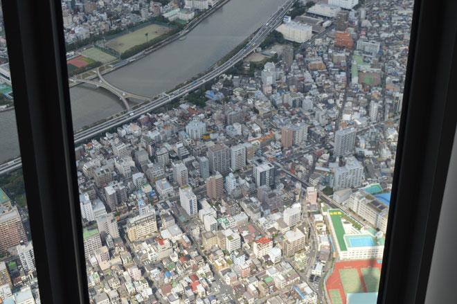 タワーの上からの風景です