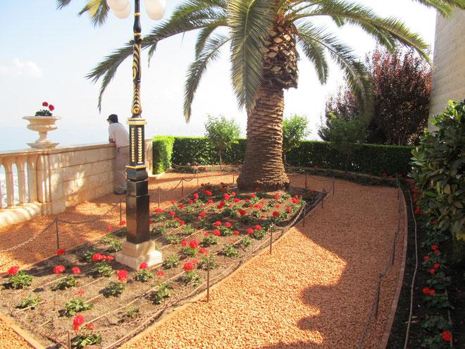 финиковая пальма - символ Иудейского царства