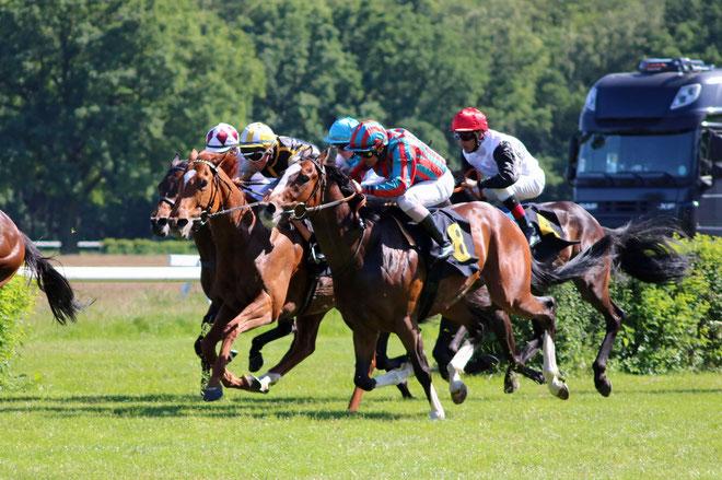 Bild: Pferde beim Pferderennen, Rennbahn Hoppegarten