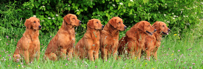 Moose (Cocoa), Classic, Cuba, Cayman, Raven, Rocket 12.06.2011