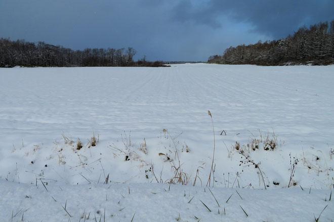 畑も真っ白