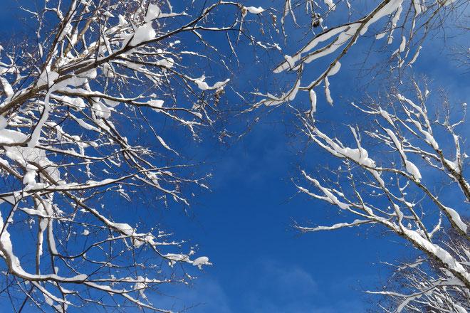 大晦日のツアーは青空とキラキラな雪景色