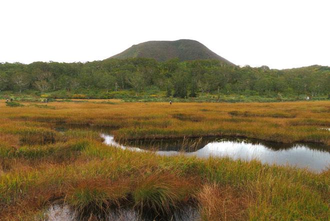 苅安色に染まり始めた神仙沼周辺の湿原