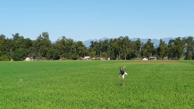 Champs de blé avec en fond le début de l'Himalaya