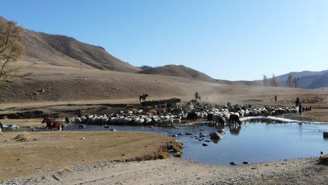 Une belle riviere ou moutons, vaches, chevaux et cyclistes vont pouvoir se desalterer et se tremper les pieds en la traversant...