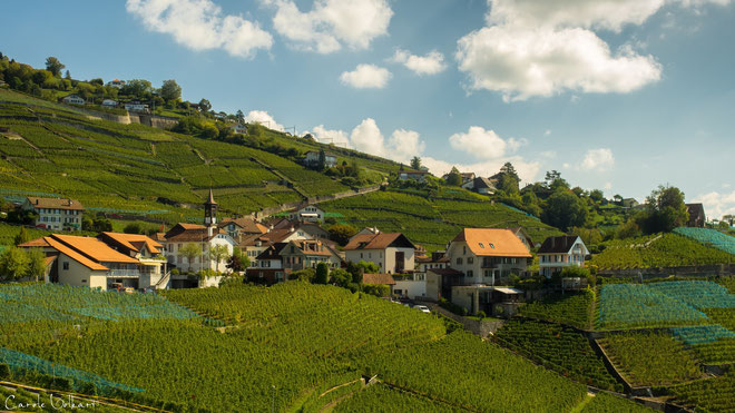 Das Weindorf Aran