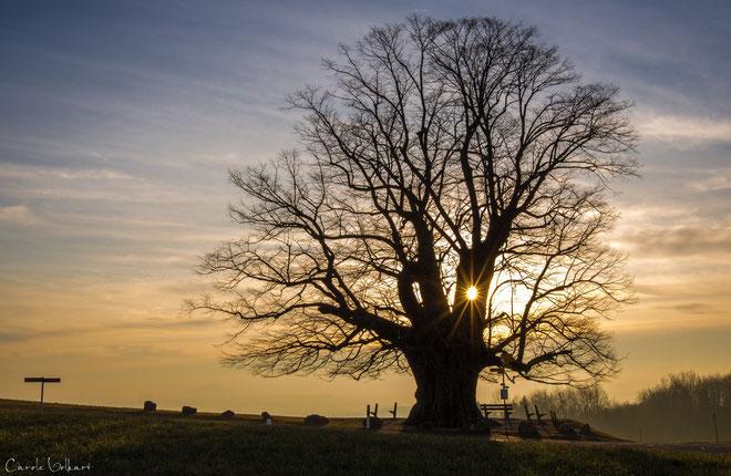 Und hier schien die Sonne durch ein kleines Baum-Guckloch - ist das nicht einfach fantastisch?