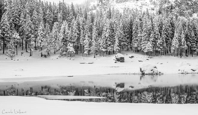 am See - an einigen Stellen hat das Wasser bereits begonnen, zu gefrieren