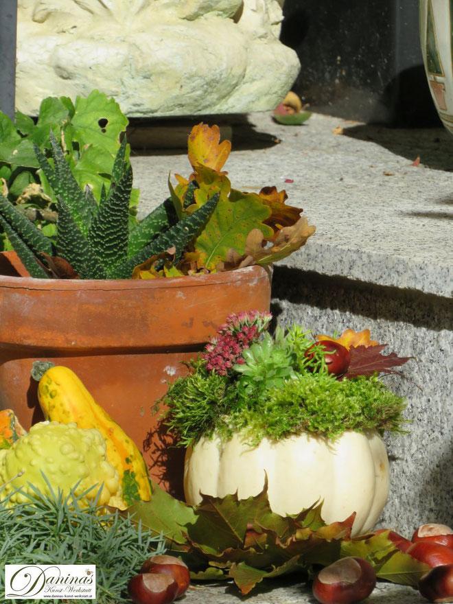 Herbstliche Kürbisdeko mit Moos, Hauswurz, Fetthenne, Mauerpfeffer, bunten Herbstblättern und Kastanien