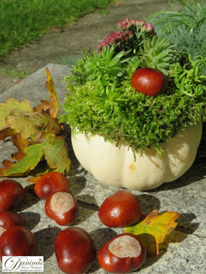 Herbstliche Kürbisdeko für draussen mit Moos, Hauswurz, Fetthenne, Mauerpfeffer, bunten Herbstblättern und Kastanien