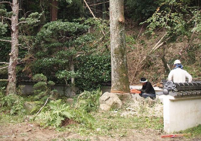 樹齢100年以上モミの木の伐採