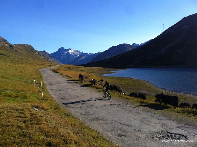 è inusuale iniziare il giro a quota 2600 m SLM........ebbene si, al colle del Nivolet ci siamo solo noi e tante mucche....