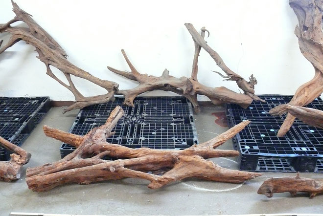 Neue XXXL Mangroven Wurzeln