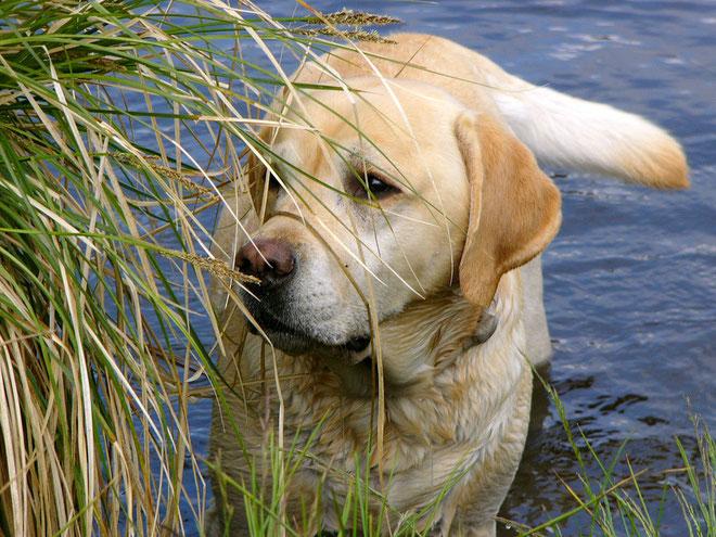 Dundee, mein unvergessener Freund und Herzenshund