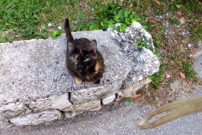 Unser kleines Katzenmädchen Blacky.Sie muss Kinder gehabt haben, die wir aber nie gesehen haben.
