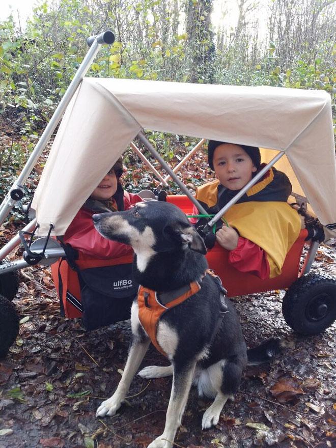 Gassi gehen mit Hund und ulfBo