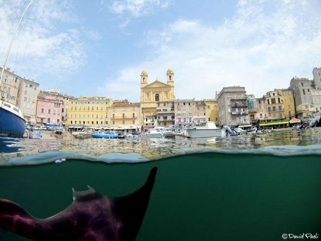 (Photos David Paoli et Corsica Photosub)