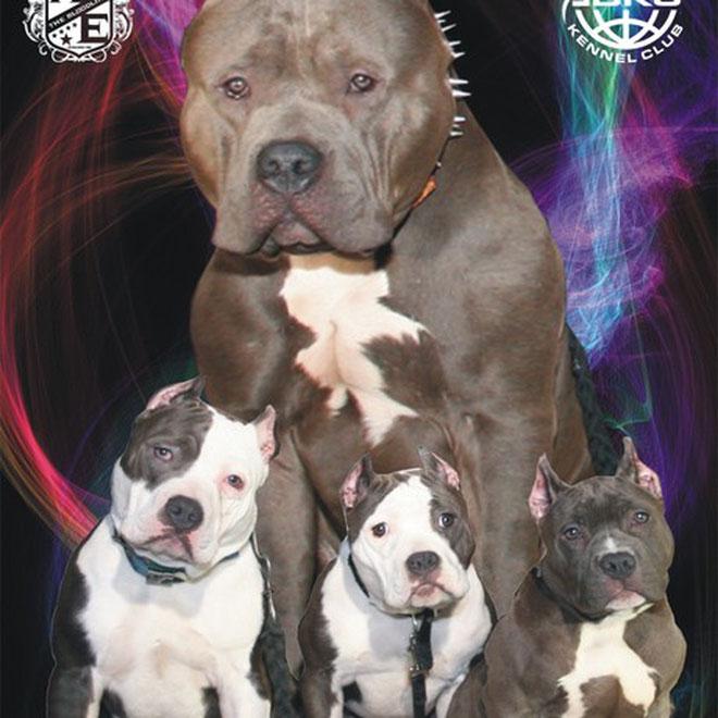 el portal de las mascotas raul: