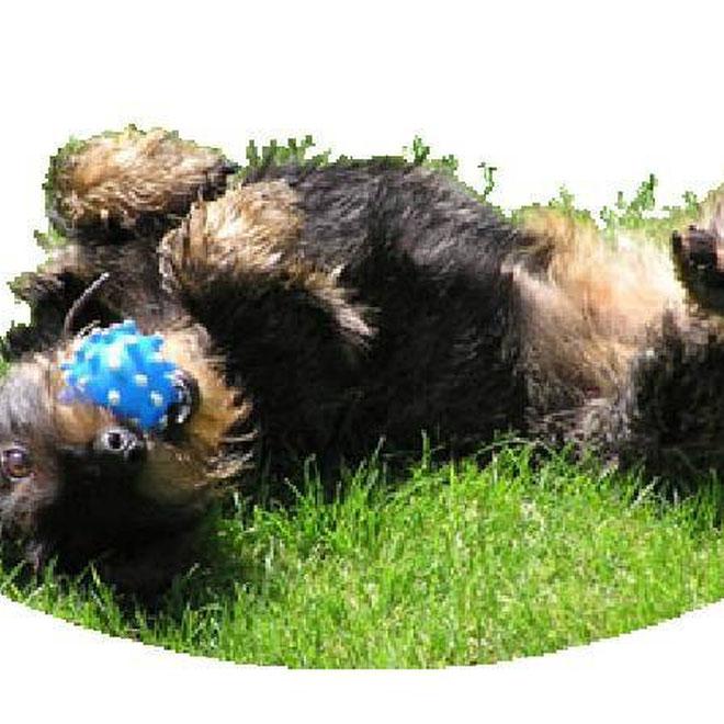 Da bayrische Hund 2
