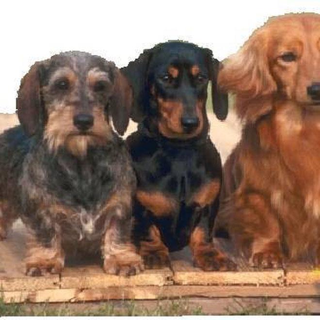 Da bayrische Hund 3