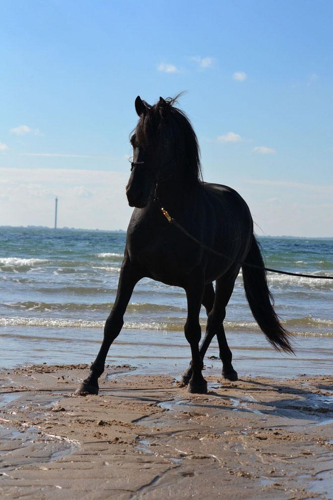 Donny liebt den alljährlichen Erholungsurlaub am Meer in seiner großen Pferdefreundegruppe sehr