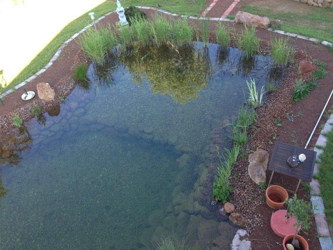 Wasserqualität Teich