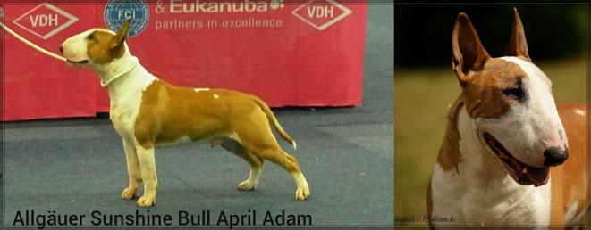 April Adam Jugendklasse