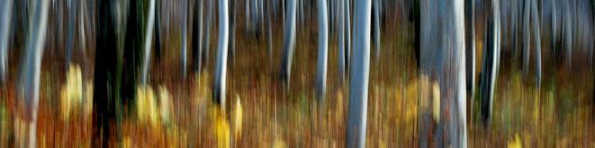 Foto: Andreas Ender, photo-art+painting - Buchenwald | Hohenems - 2007 | malen mit der Kamera | ooc