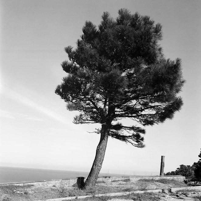Grenzbaum - Photography by daffilm
