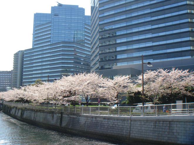 4月・目黒川沿いの桜とゲートシティ大崎