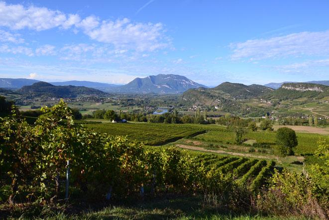 Les vignobles de Jongieux, à 30 mn de Villa Aosta