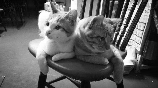 店内にて。楽楽の看板猫