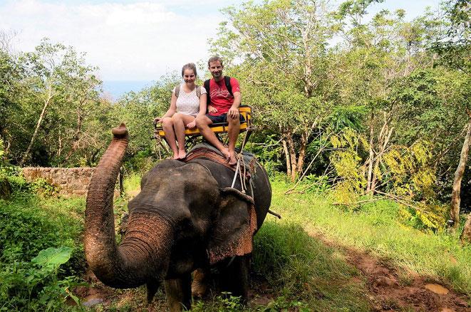 freaky finance, freaky travel, 2 Personen auf Elefant, Elefantenreiten, Dschungel, Pflanzen, grün, Meer im Hinterdrund