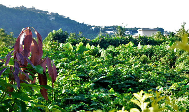 freaky finance, freaky travel, Dschungel, Pflanzen, grün, Hügel im Hintergrund