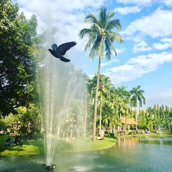 freaky finance, freaky travel, Park, Chiang Mai, Wasserfontäne, Vogel, Palmen