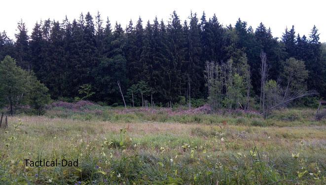 Das hier ist ein interessantes Biotop. Im Hintergrund liegt ein Biberdamm, durch den Wasserstand sterben die Bäume ab.