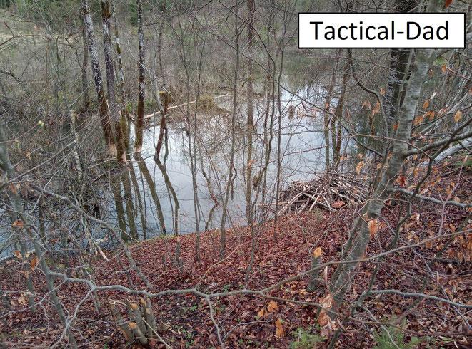 Rechts vorne ist die Biberburg. Ich schätze die angestaute Wasserhöhe auf etwa 1 Meter.