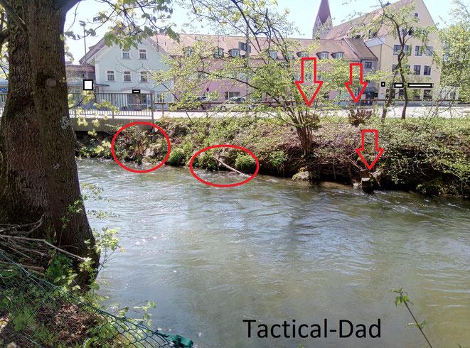 Der Baumstamm links und der Ast im Wasser wurden vom Biber angefressen. Die beiden Sträucher im Hintergrund und einige Bäume am Ufer wurden gefällt, damit er kein weiteres Baumaterial bekommt.