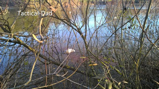 Der Schwan war am Ufer im Eis festgefroren und zeigte kaum noch Lebenszeichen, weswegen wir von Spaziergängern gerufen wurden.