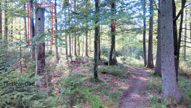 Ist in diesem toten Baum etwa eine Kamera versteckt? Nein, der Förster hat hier nur für Vögel einen Zugang geschaffen.